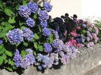 Jardins fleuris_1