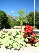 Jardins fleuris_2