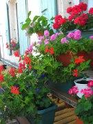 Jardins fleuris_5