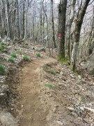 Sentier entre Vieux-Mayres et Montlaur_11