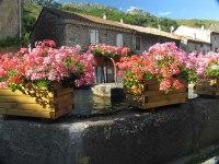 Mayres fleuri_1
